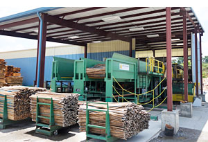 Accu-Placer infeed bins